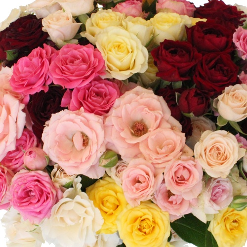 Wholesale Farm Mix Spray Roses for Mom