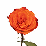 Wholesale Rose Orange Voodoo
