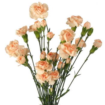 Peach Mini Carnation Flowers