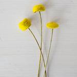 Green Yoko Ono Bulk Novelty Button Flower