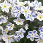 All Flowers~PhloxWedding Flowers~Colors~Pink HotWedding Flowers~Type~Phlox