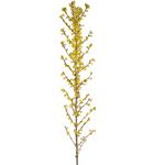 Bulk Alstromeria Corte d Azur flower