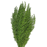 Wholesale foxtail greenery sold as bulk for delivery