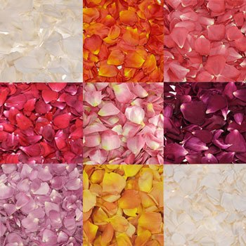 Choose Your Own Freeze Dried Petals