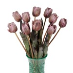 Brownie Standard French Tulip Wholesale Flower In a vase