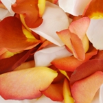 Terracotta Rose Petals Wholesale
