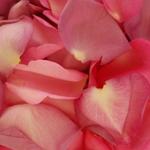 Wedding Rose Petals for sale