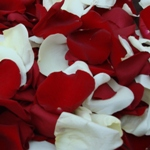 Fresh Rose Petals Red and White