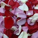 Buy Rose Petals for a wedding