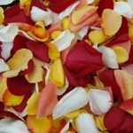 Fresh Rose Petals Sunset Blend