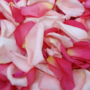 Touch of Pink Petals