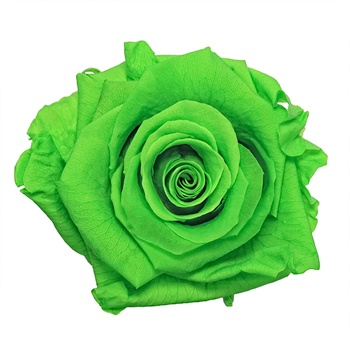 Preserved Green Glow Rose
