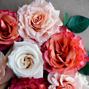 Fresh Cut European Garden Roses for Your House
