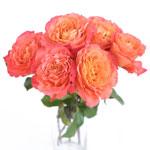 Garden Rose Sunset Bunch in a Vase
