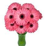 Gerbera Daisy Avenue Pink Wholesale Flowers In a vase