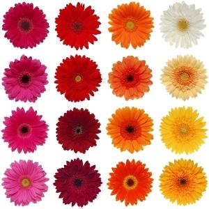 Gerbera Daisy Farm Mix Wholesale Flower Blooms