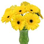 Gerbera Daisy Yellow Standard Wholesale Flowers In a vase
