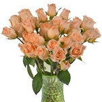 bulk peach spray roses