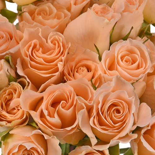 Peach Spray Bulk Roses