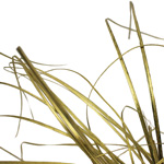 Wedding greenery gold bear grass filler flowers sold near me