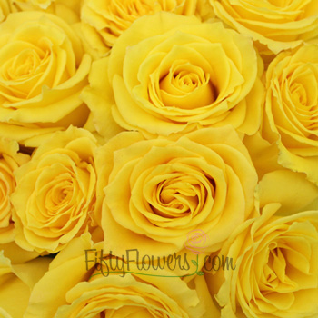 Golda Yellow Rose