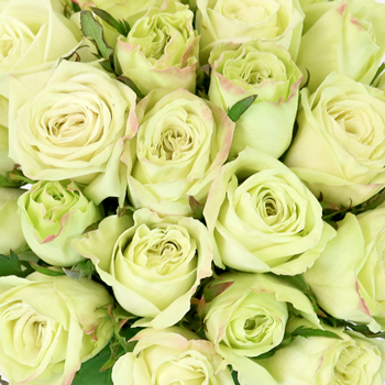 Emerald Mist Sweetheart Roses