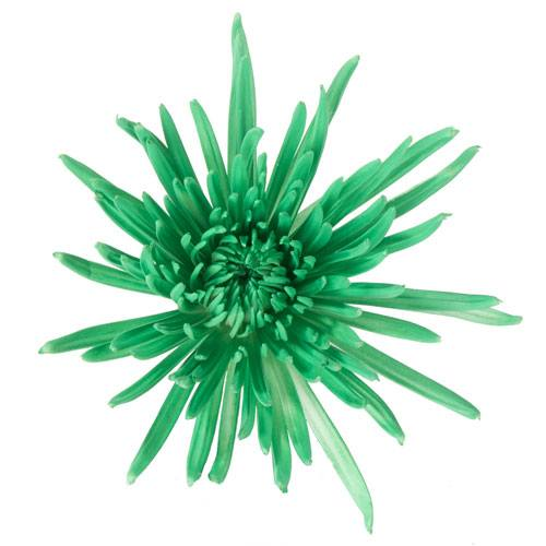 Kelly Green Airbrushed Spider Mum