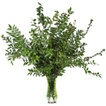 Wholesale greenery huckleberry filler flowers sold as bulk