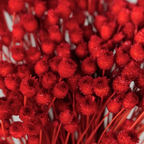Dried Red Velvet Happy Flowers