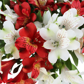 Happy Holiday Flower Package Alstroemeria