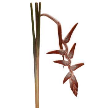 Plush Hanging Heliconia