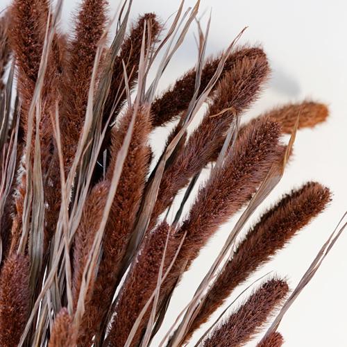 Dark Hickory Foxtail Grasses