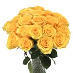 Orange Rose Indian Femma