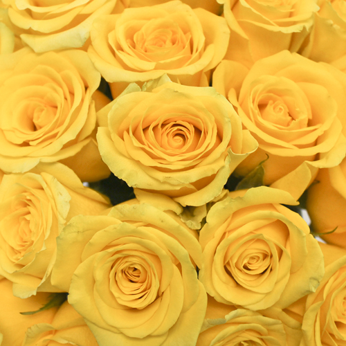 High Exotic Bright Yellow Rose