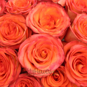 High and Orange Magic Rose