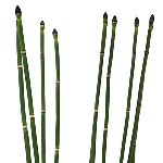 Wholesale fresh cut greenery horsetail filler flowers bunch