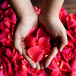 Buy Bulk Hot Pink Rose Petals
