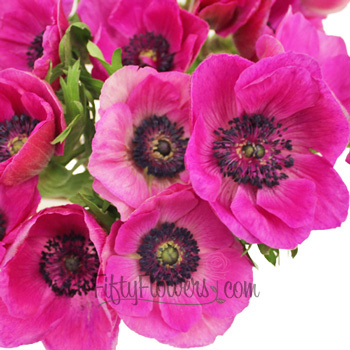 Hot Pink Fresh Cut Anemones