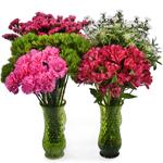 Filler Flower Combo Package 1