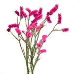 Wholesale Pink Statice Flowers online