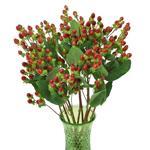 Burgundy Hypericum Berry Flowers