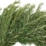 Fresh Wreaths Rosemary