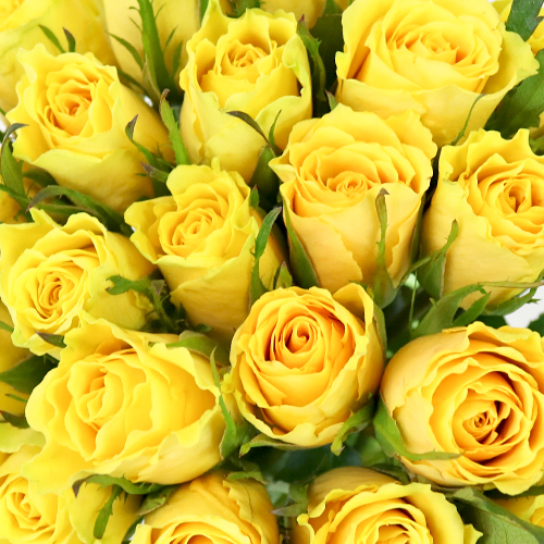 Yellow Idol Sweetheart Roses