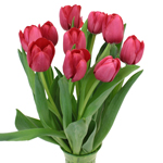 Red Tulip Flowers