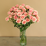 Ilse pale pink Wholesale Roses In a vase