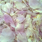 Blush Dried Peony Flower Petals