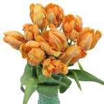 Monarch Parrot Novelty Tulip Flower