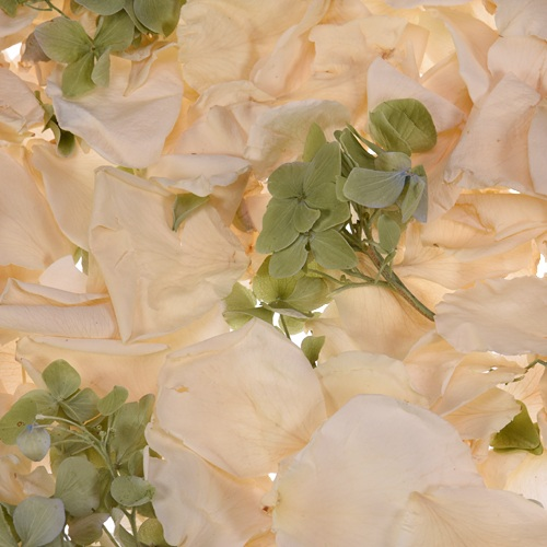 Green and Cream Irish Dried Petal Blend