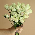 Irishka Cream Wholesale Rose Bunch in a hand