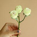 Irishka Cream Rose Stem